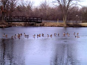 Ducks on Butler Lake